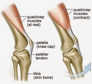 yoga tips should we pull up knee cap or not  practice
